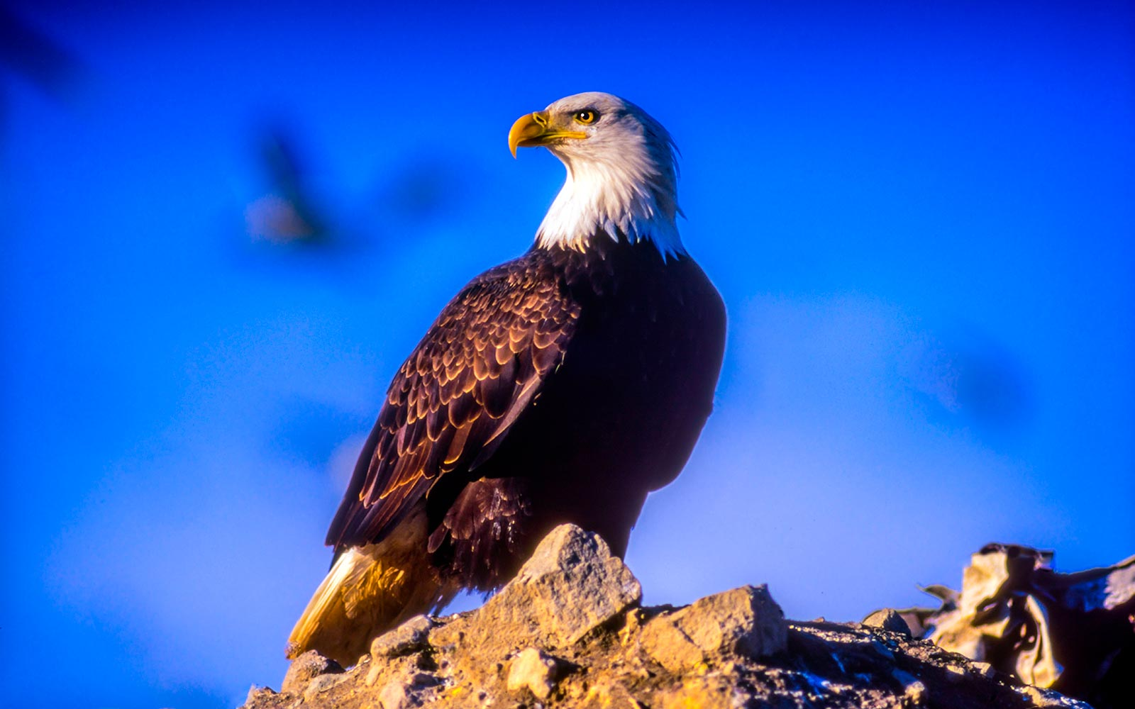 This Small Canadian Town Is One of the Best Places on Earth to Spot Bald Eagles