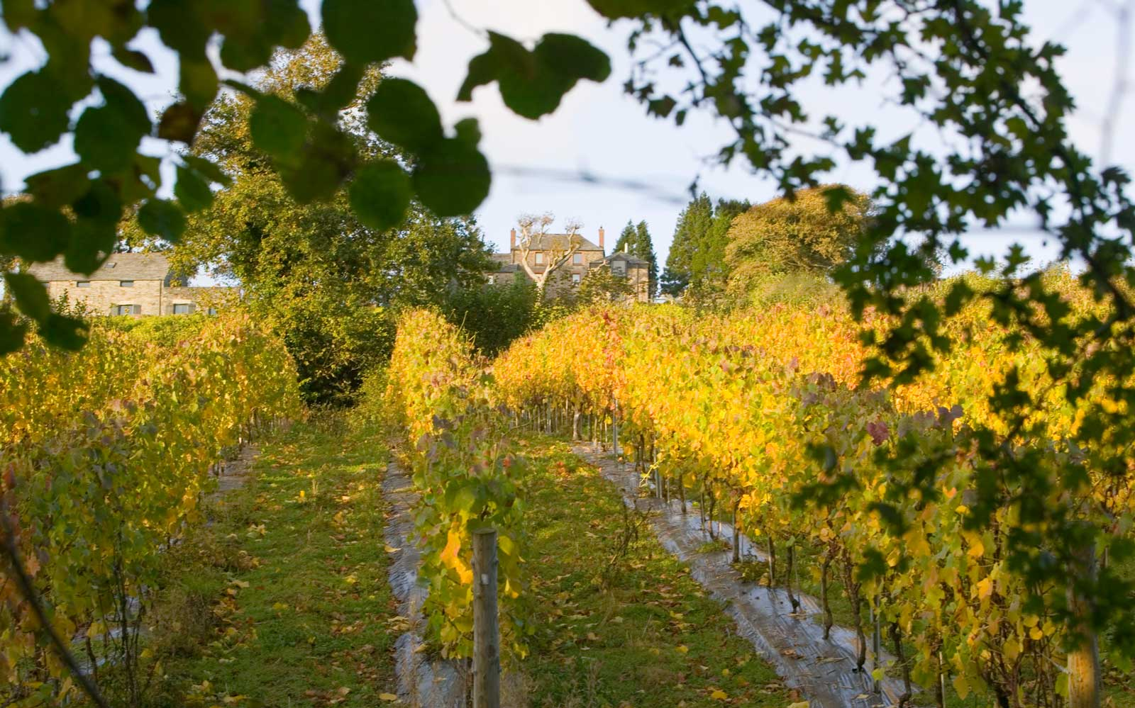 This Is the One British Vineyard You Need to Visit, According to the Royal Family