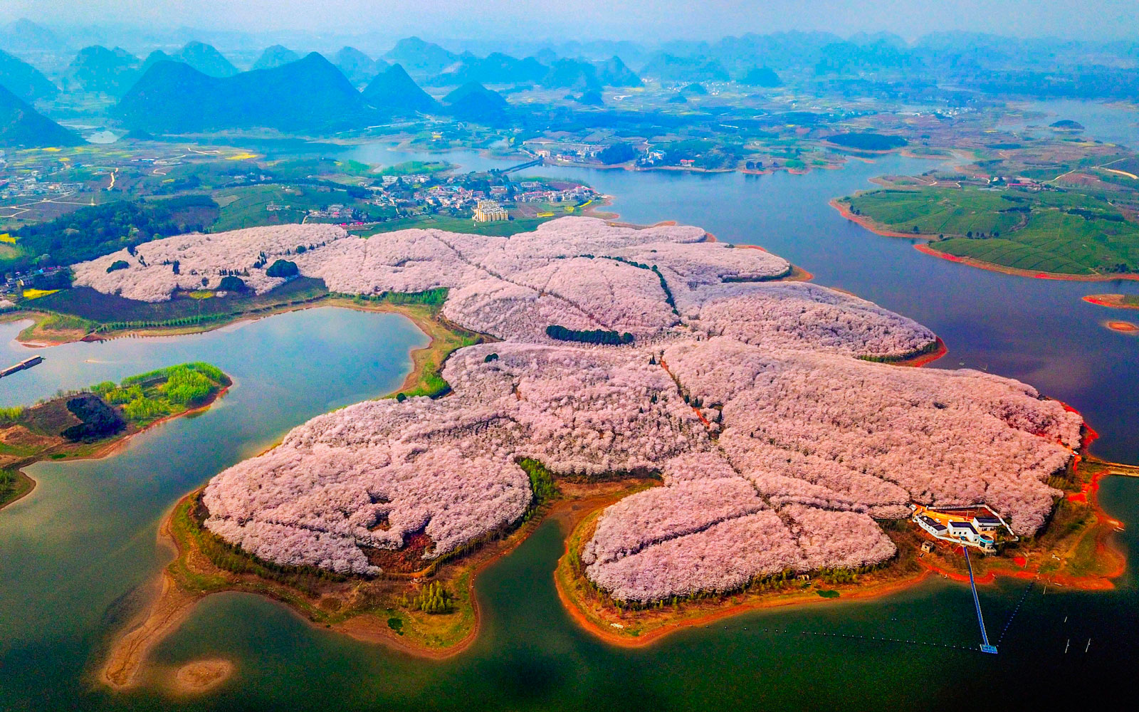 China's Spring Flowers Look Magical in These Photos ...