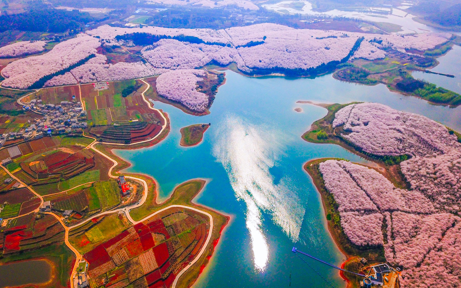 China's Spring Flowers Look Magical in These Photos