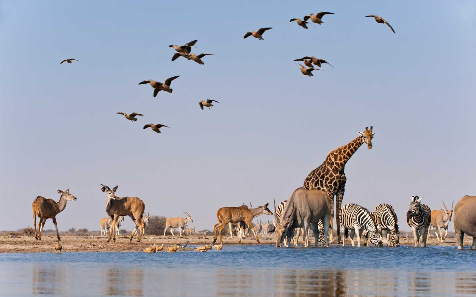 Different groups of animals at waterhole, Etosha National Park, Namibia