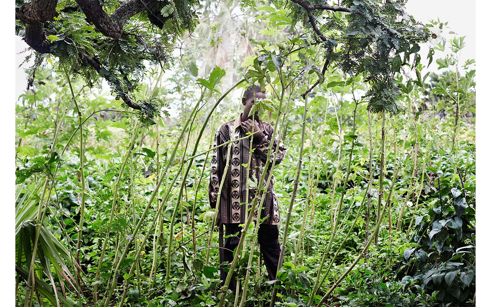 Cassava, Togo 2014, from Circadian Landcape by Jessica Antola