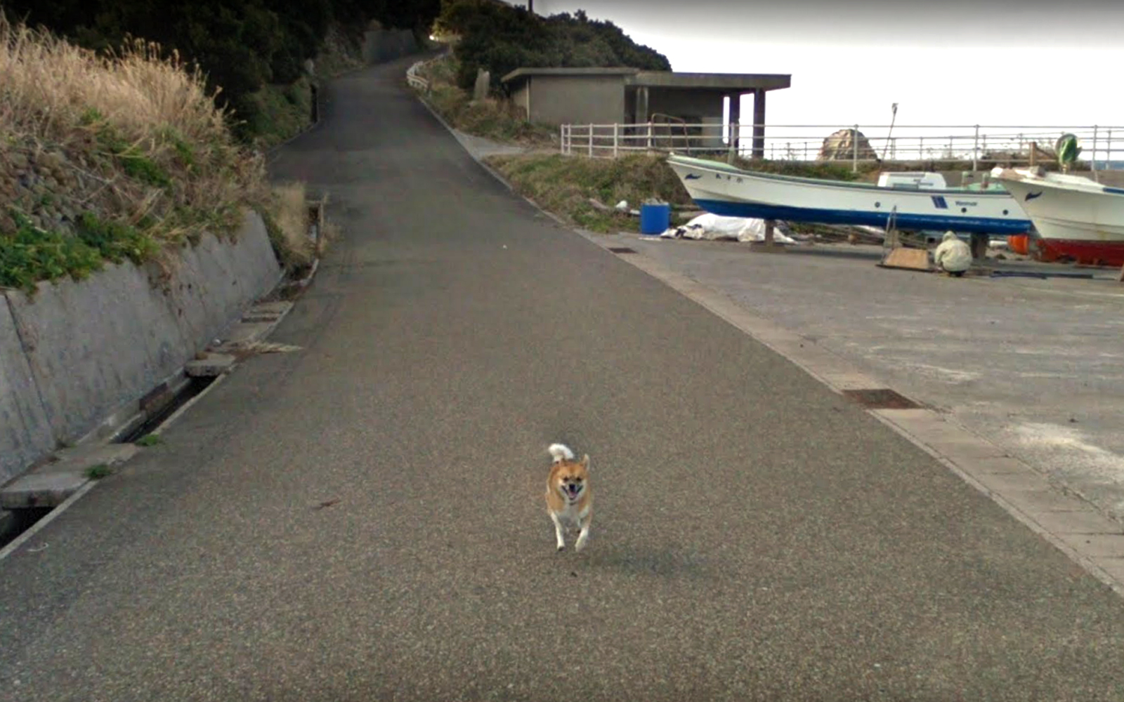 Dog chasing Google Streetview Car