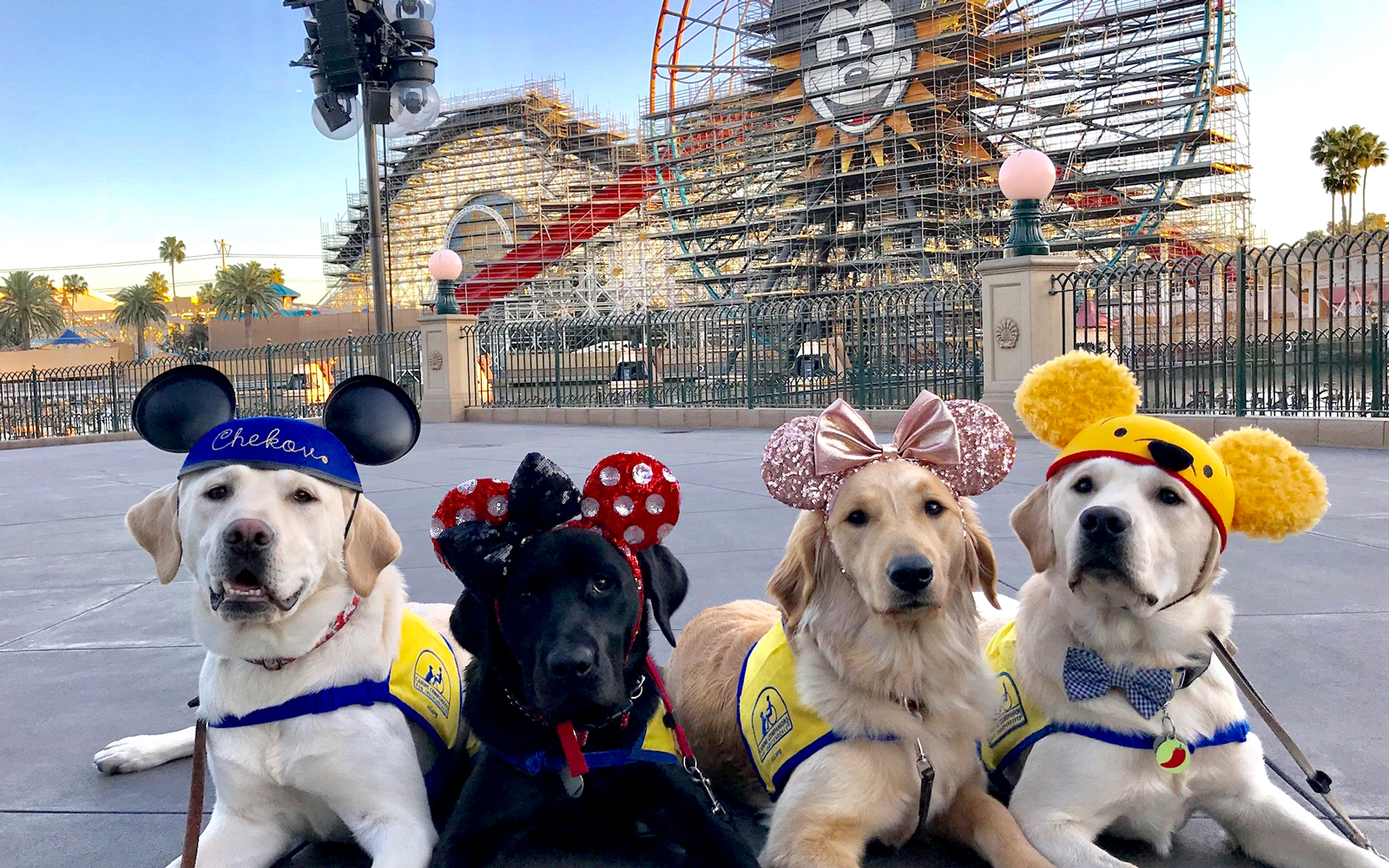 Canine Companions puppies at Disneyland