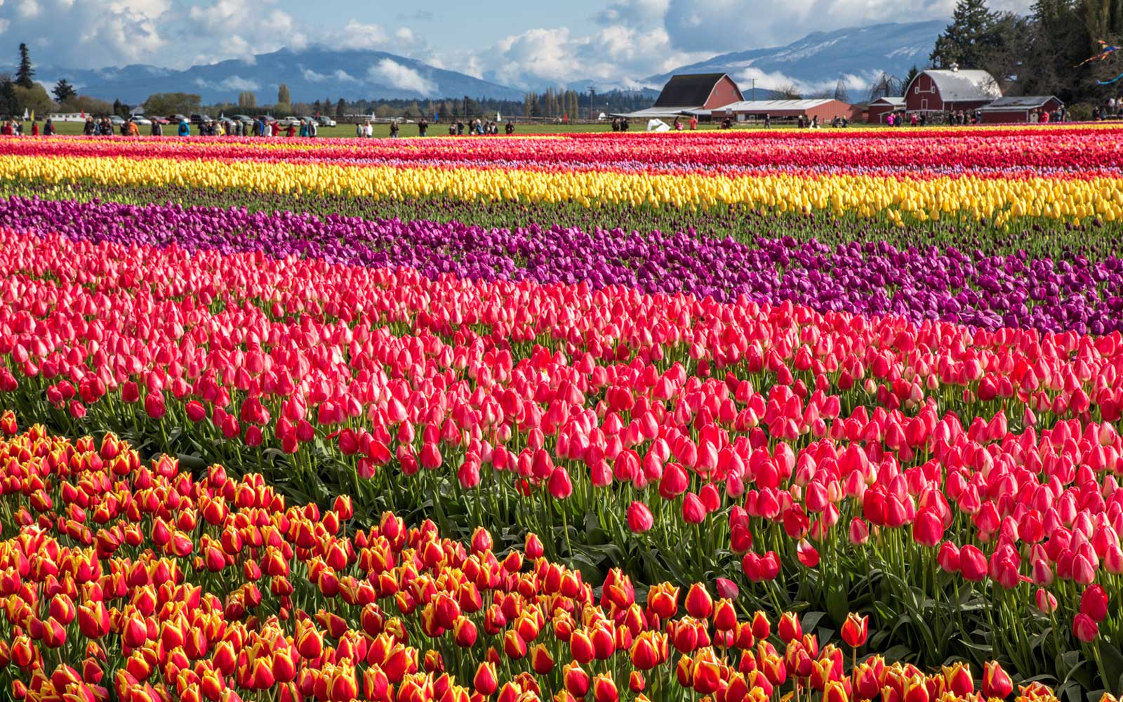 8 Best Spring and Summer Flower Festivals In the U.S.