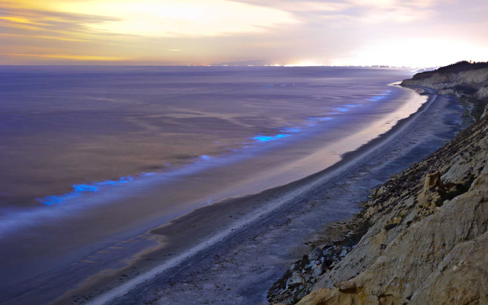 San Diego Shores Light Up With Bright Blue Bioluminescence