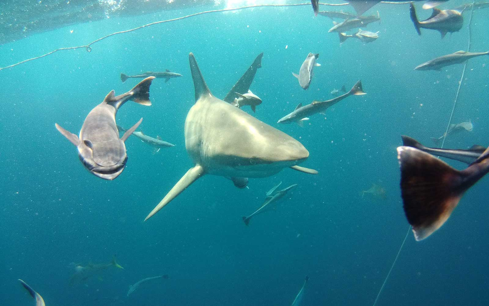 You Can Swim With Sharks at This Daring Diving Spot — No Cage Required