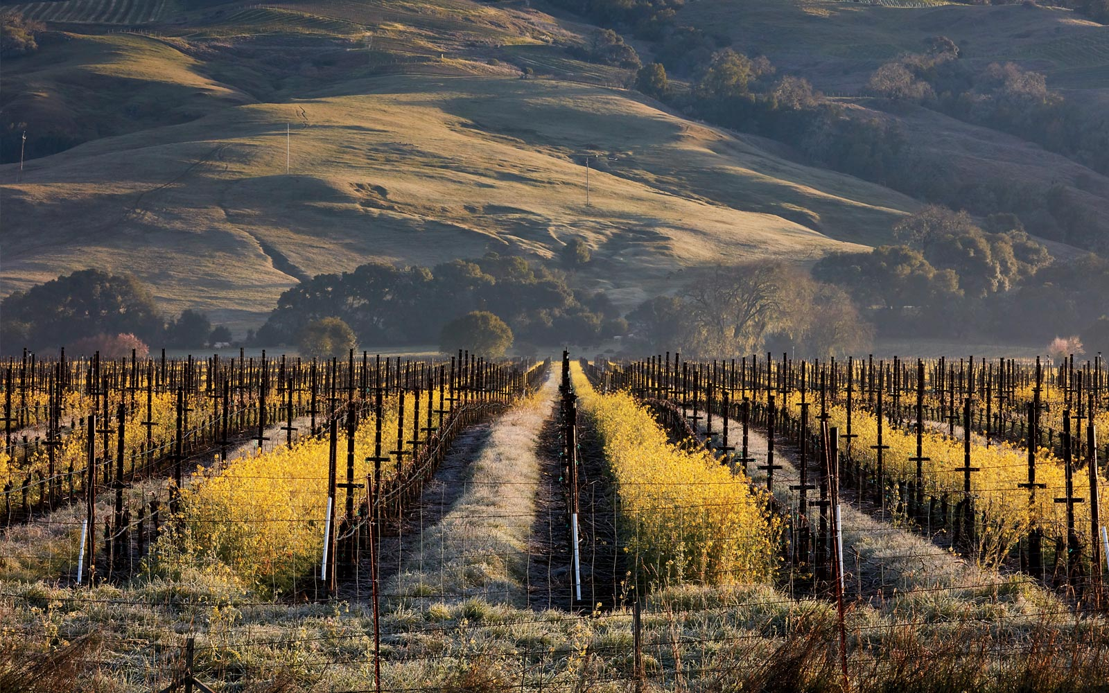 A vineyard in Anderson Valley, California