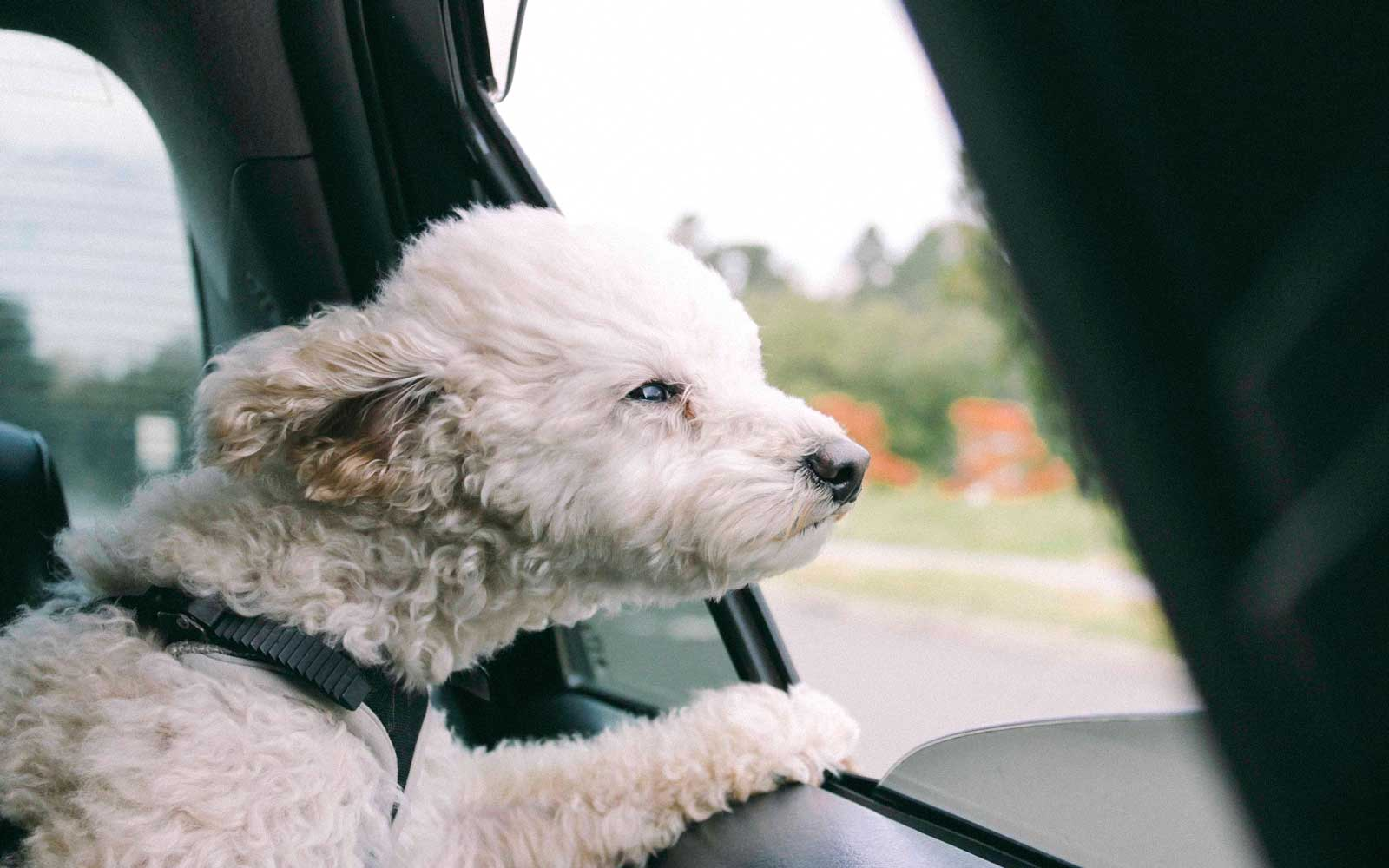 How to Keep Your Dog From Getting Car Sick — and What to Do If It Happens