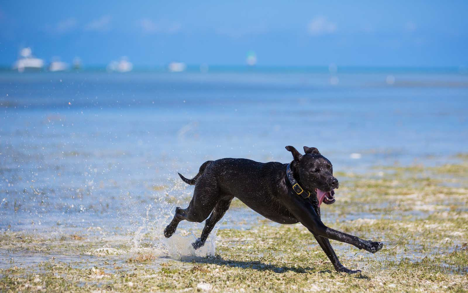 Your Pet Can Die From Drinking Too Much Saltwater — Here's How to Spot the Symptoms of Poisoning