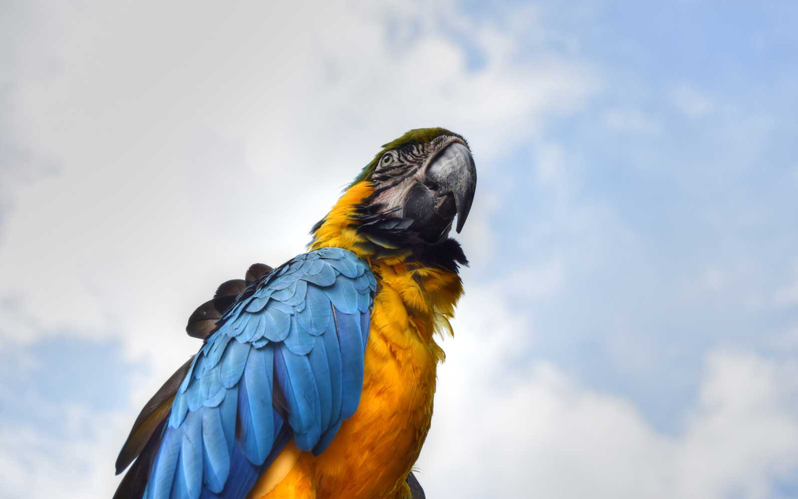 Low Angle View Of Gold And Blue Macaw Against Sky