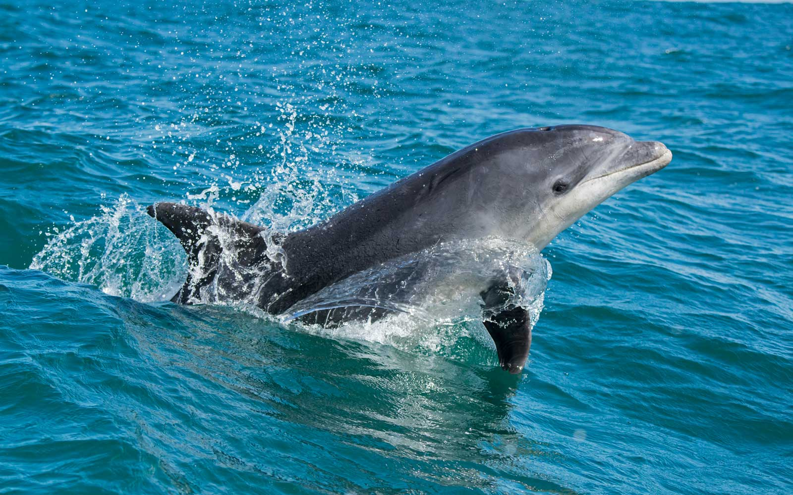 This French Town Is Banning Swimming Because of a Frisky Dolphin