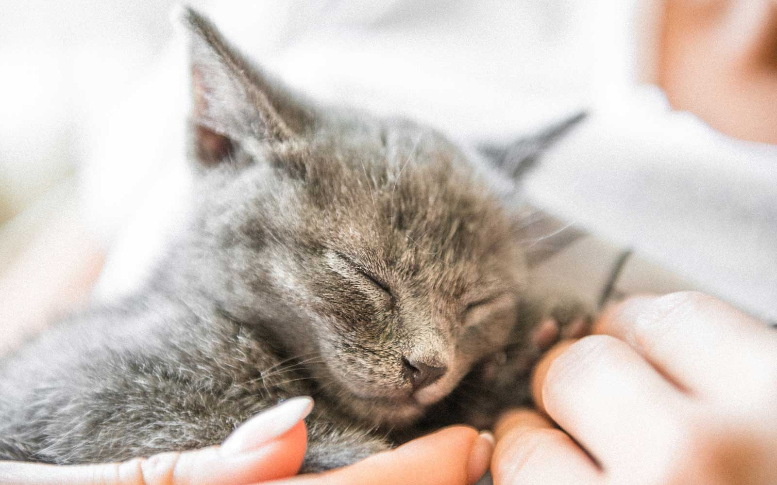 This Airport Is Treating Passengers to Comfort Kittens for Pre-flight Cuddling