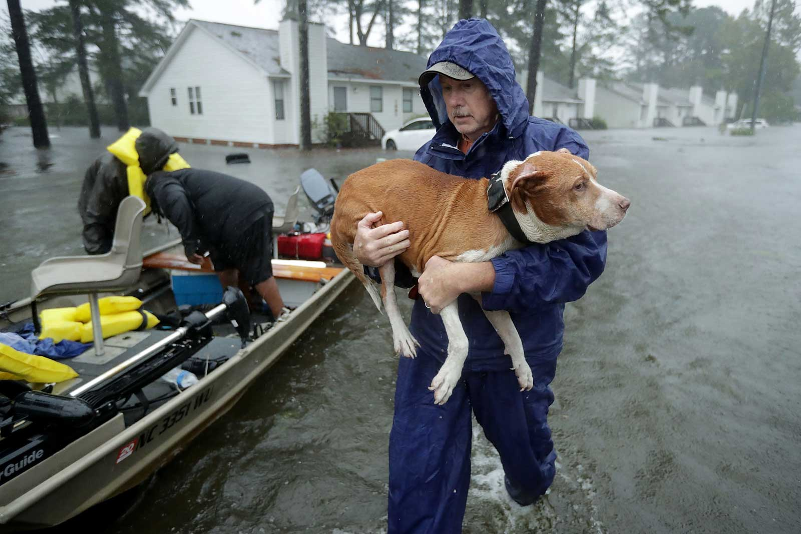 Hurricane Florence Dog Rescue