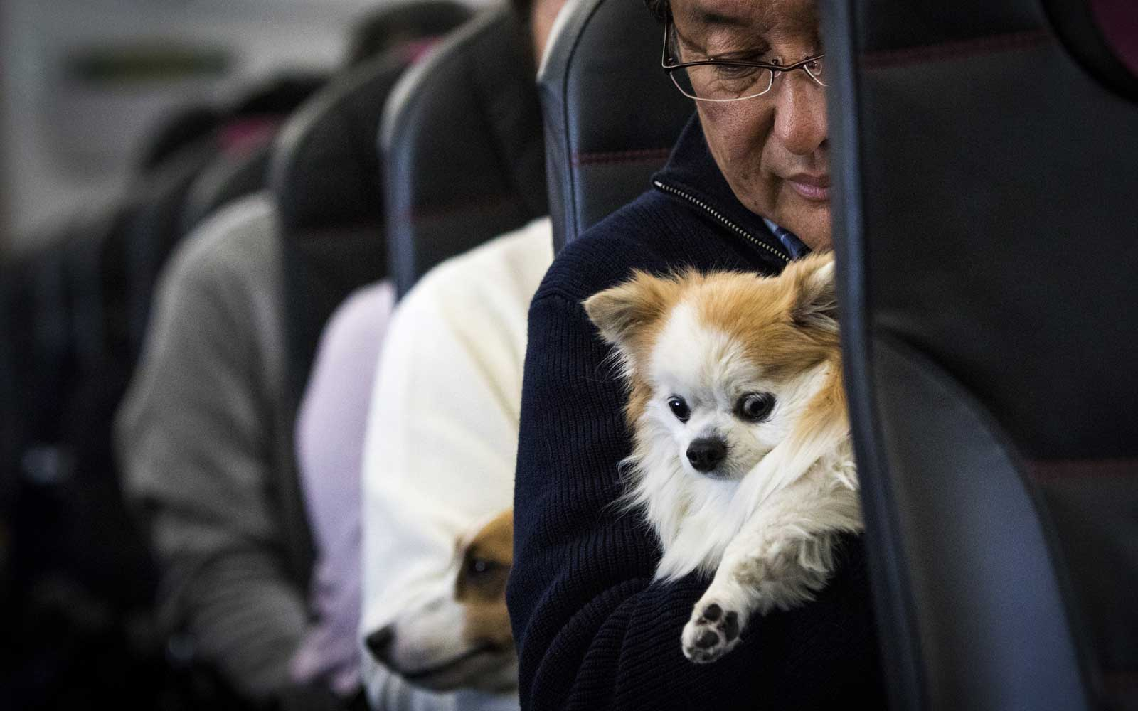 A man and his dog are seen in a plane in Chiba, Japan on January 27, 2017