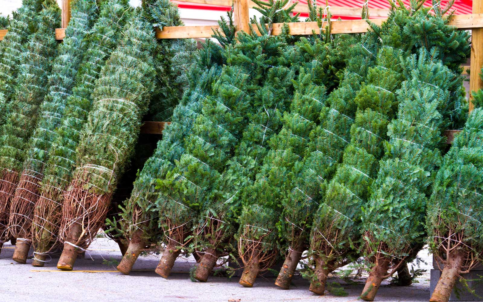You Can Order a Live Christmas Tree on Amazon This Year