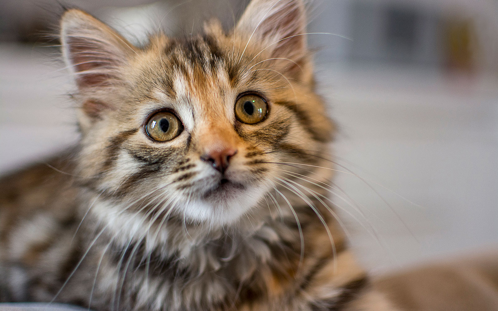 New Zealand Town Proposes Ban on Cats