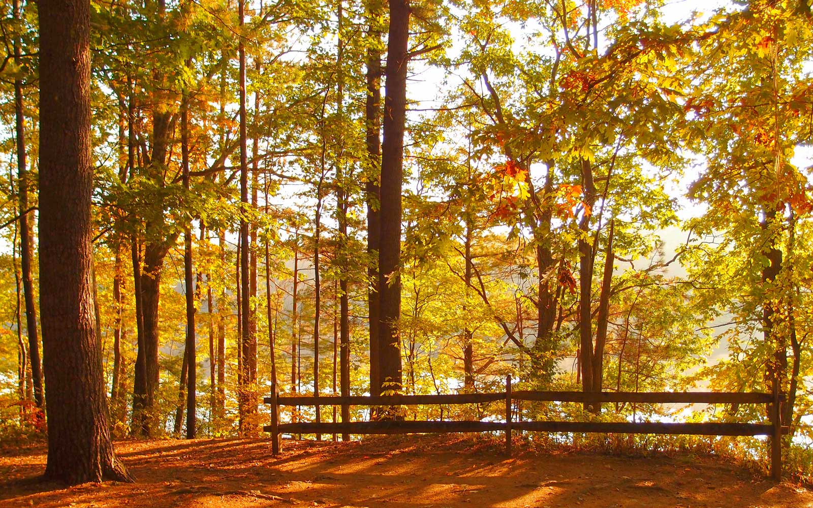 The Best Places to Camp for Gorgeous Fall Foliage Views