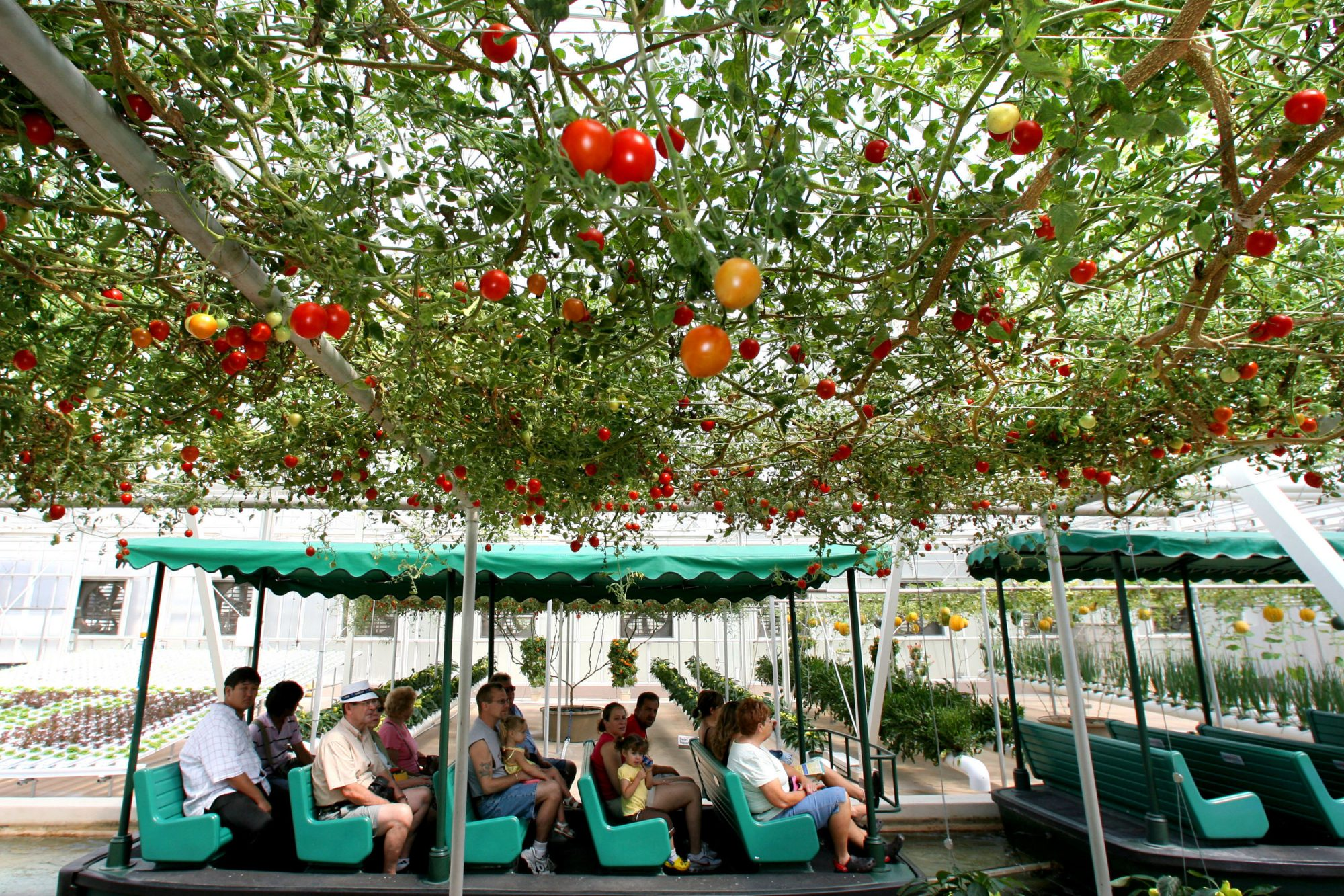 Disney World Has a Magical Greenhouse That Grows Mickey-shaped Pumpkins and 9-pound Lemons