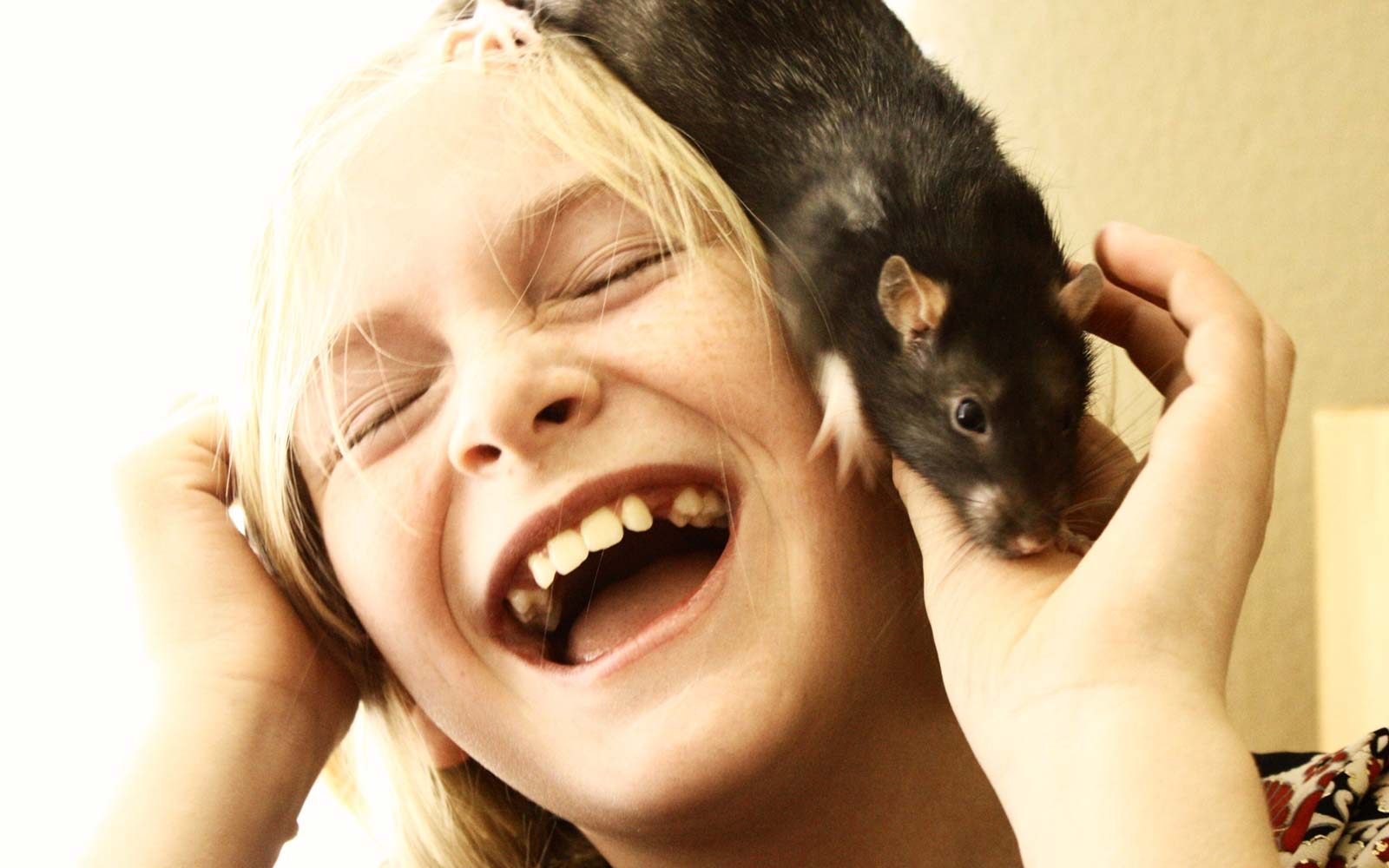 Kids Prefer Pet Rats to Cats and Dogs, According to New Study