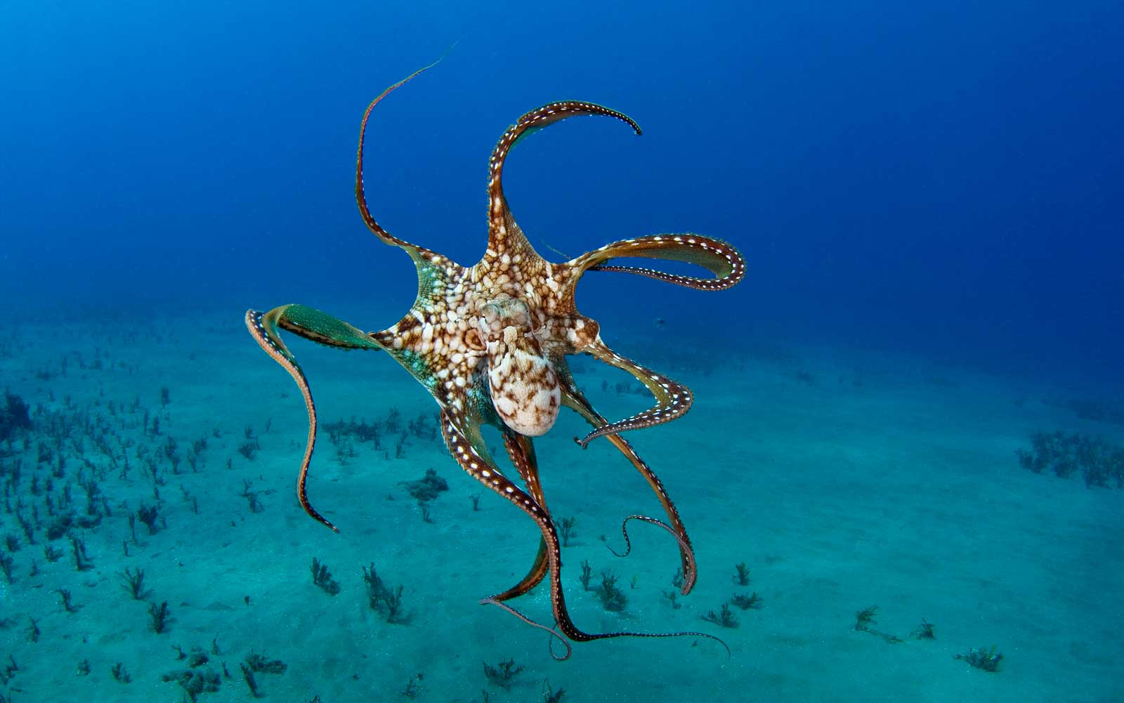 Scientists Find Ecstasy Makes Octopuses 'Gentle and Cuddly'