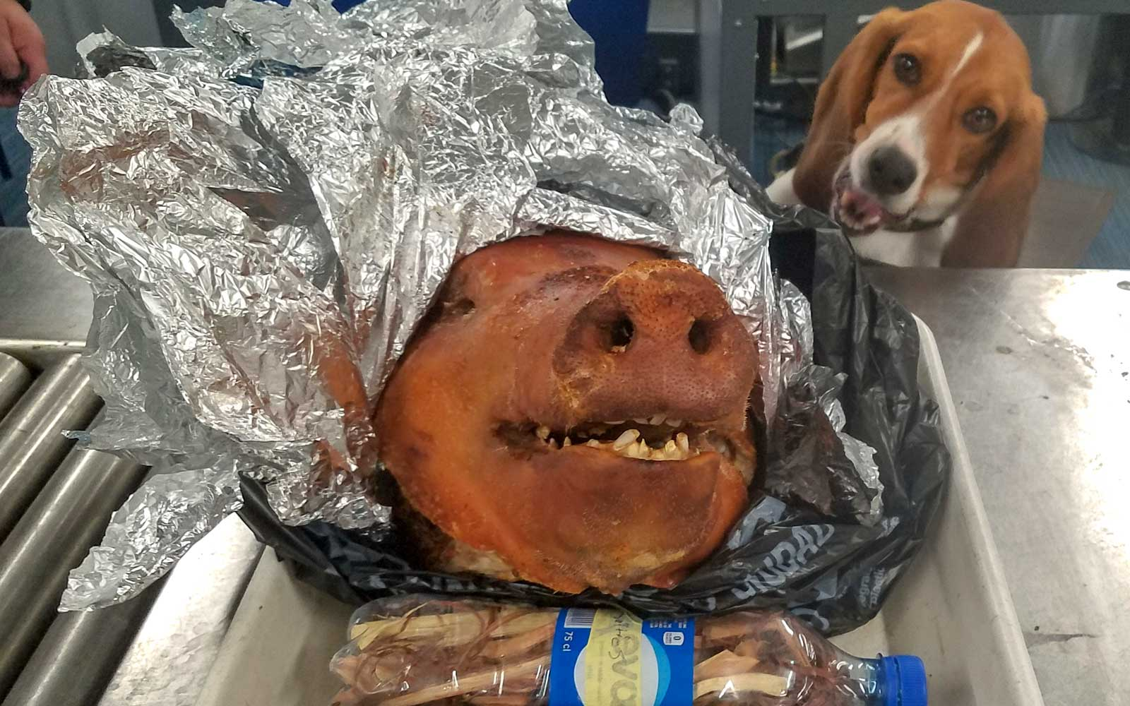 This Very Good U.S. Customs Beagle Sniffed Out an Entire Roast Pig Hidden in Someone's Luggage