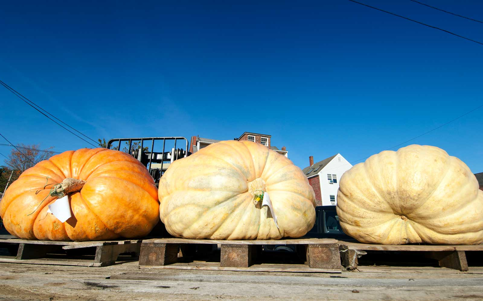 A New Hampshire Man Just Broke the Record for Growing the Largest Pumpkin in North American History
