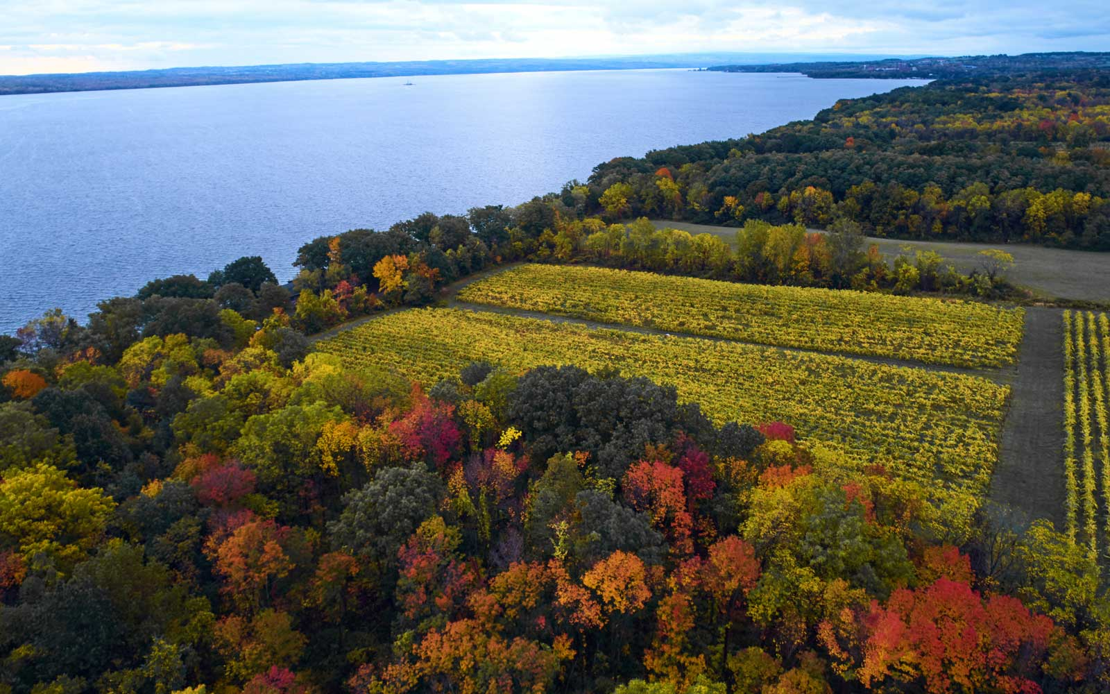 Why New York's Finger Lakes Are Becoming One of America's Best Wine Regions
