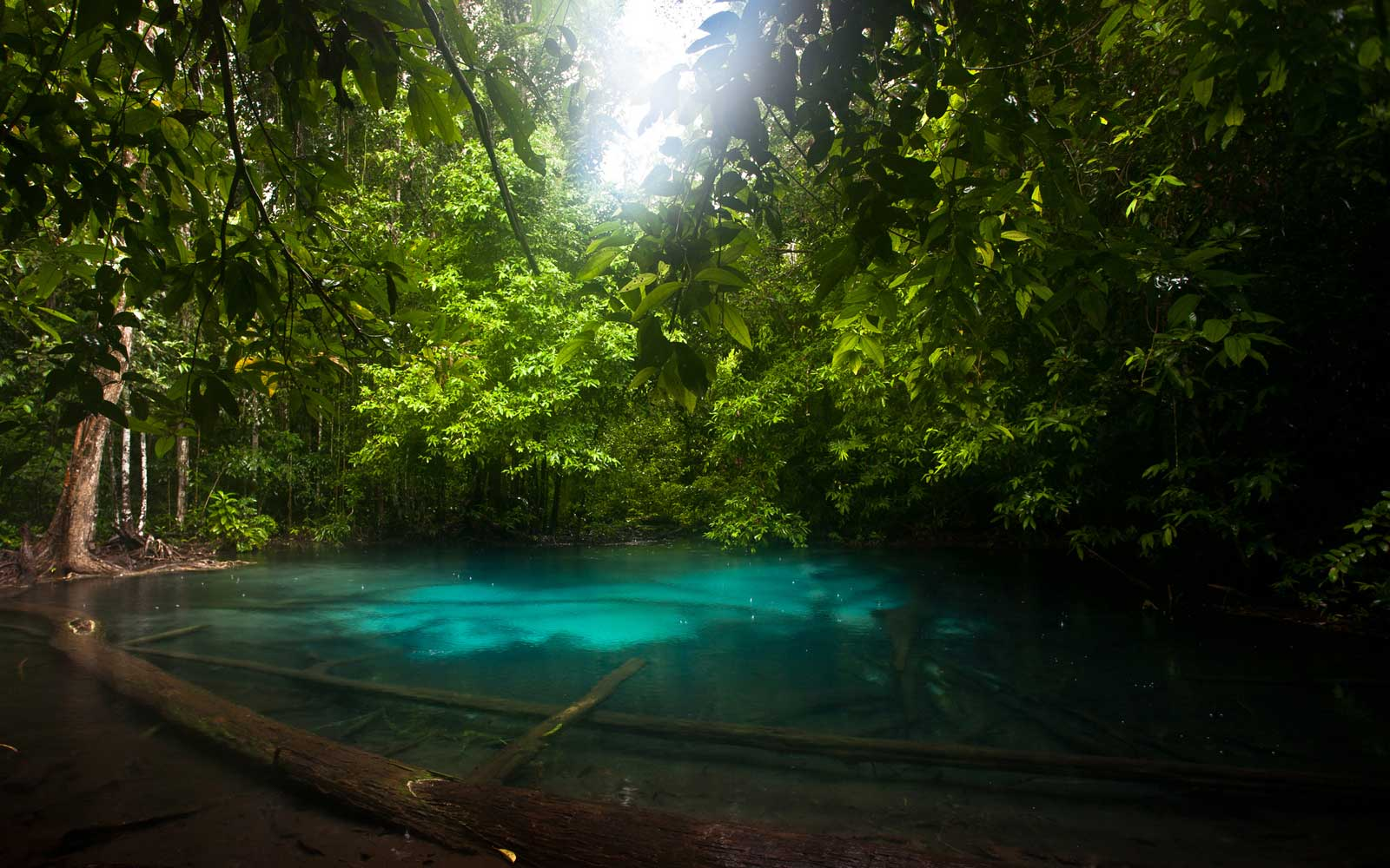 Khao Nor Juji, Emerald Pool, Krabi, Thailand