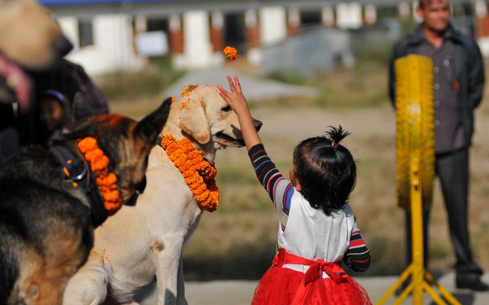 Inside 'Day of the Dogs,' a Hindu Festival in Nepal Dedicated to Our Furry Friends