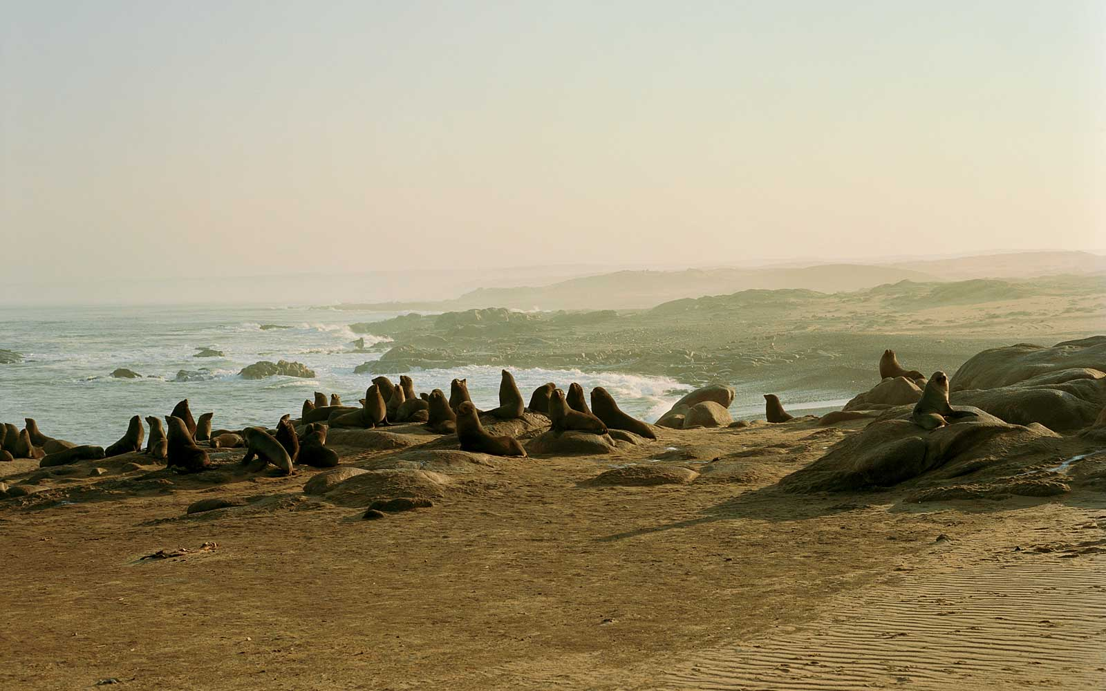 Seals on Namibia's Skeleton Coast