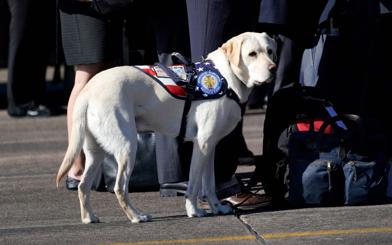 Where George H.W. Bush's Service Dog Sully Is Headed Next Following the 41st President's Death