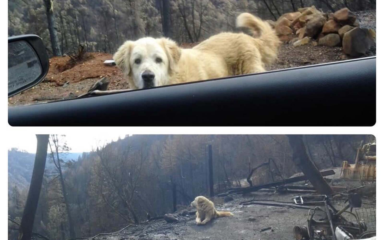 couple returns to home lost in camp fire and finds their dog | time
