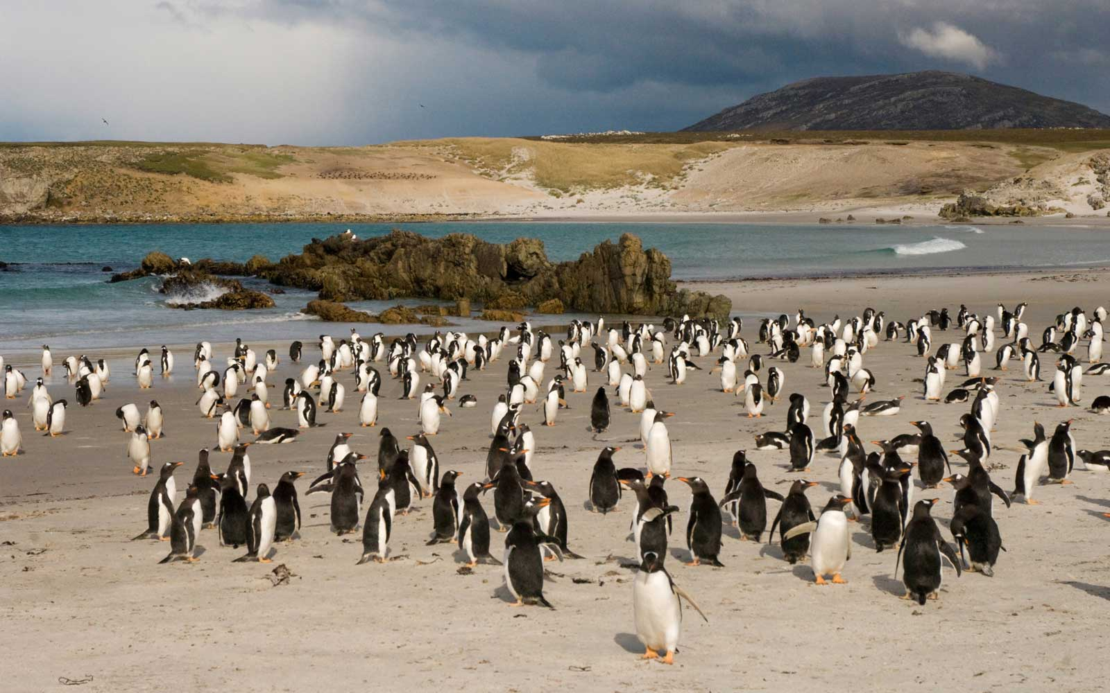 One of the Penguin-filled Falkland Islands Is for Sale — and You Name the Price