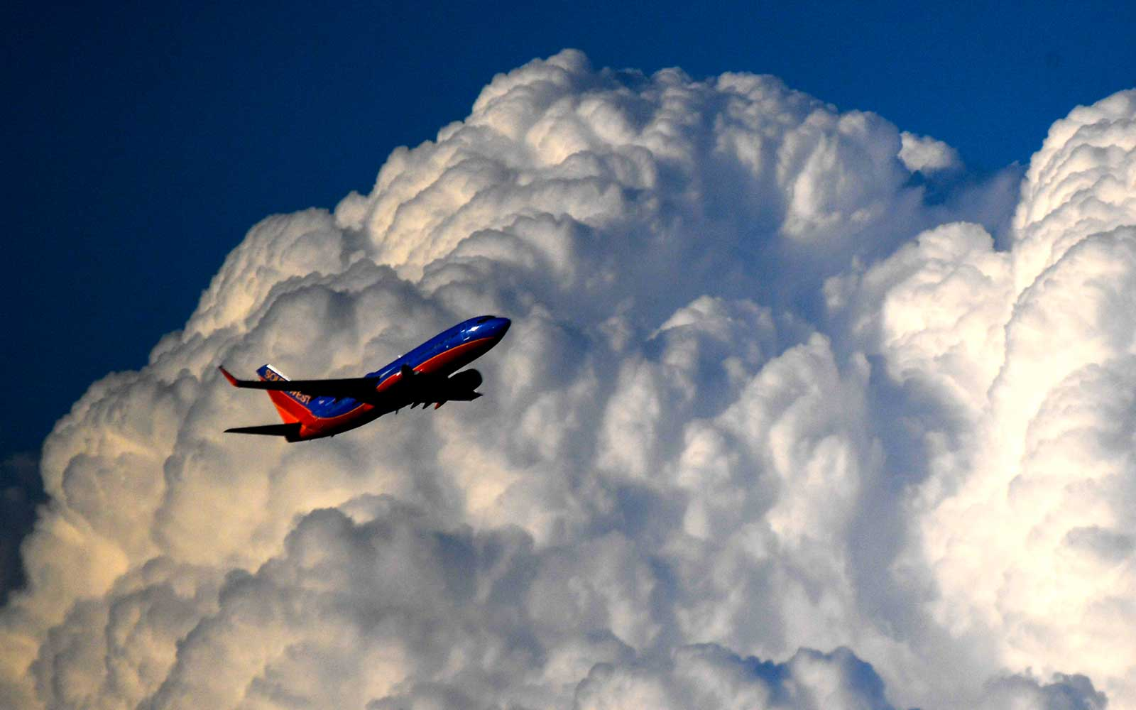 A Human Heart Was Accidentally Left on a Southwest Flight