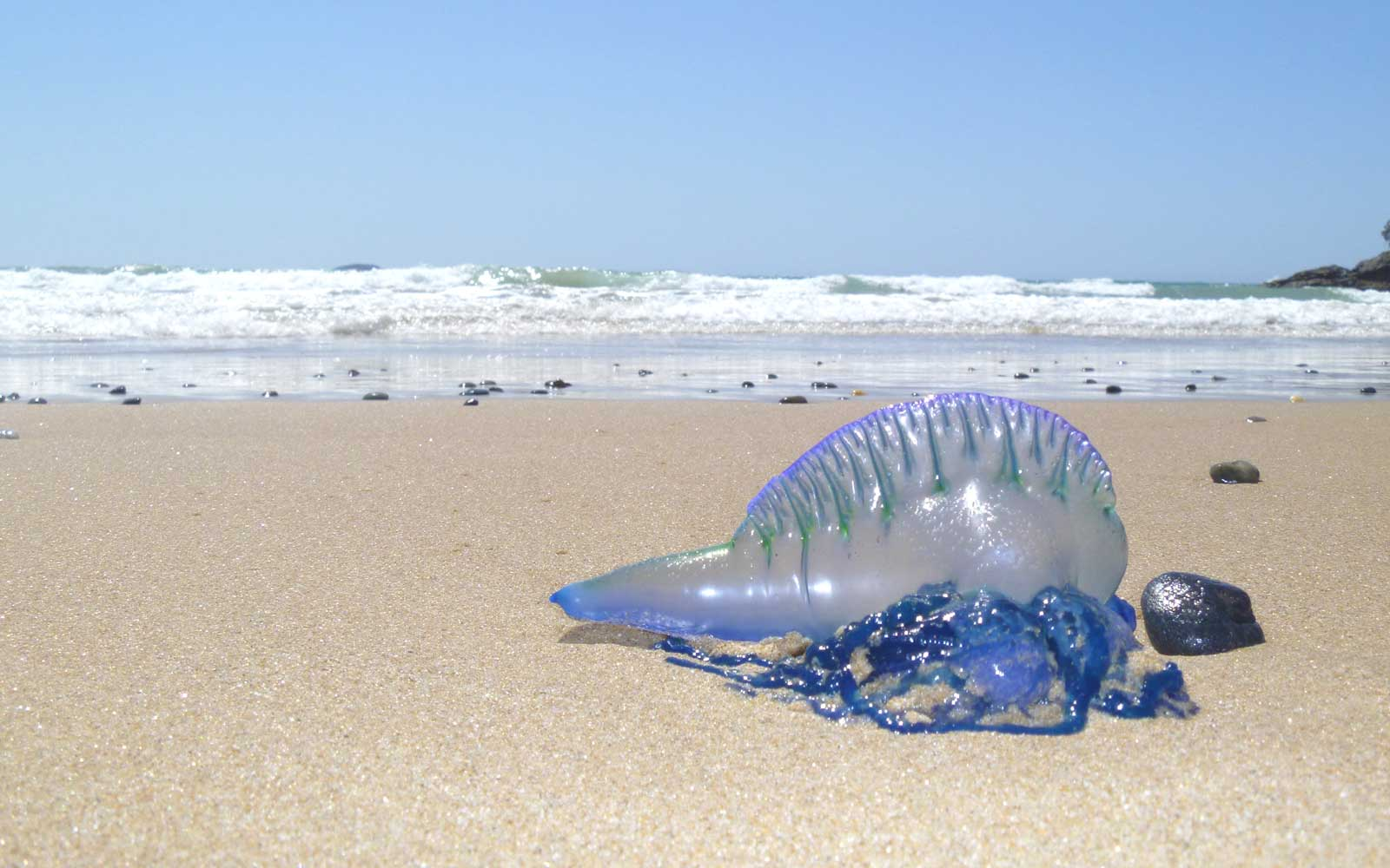 Over 3,500 People Were Stung in a Jellyfish 'Invasion' Over the Weekend