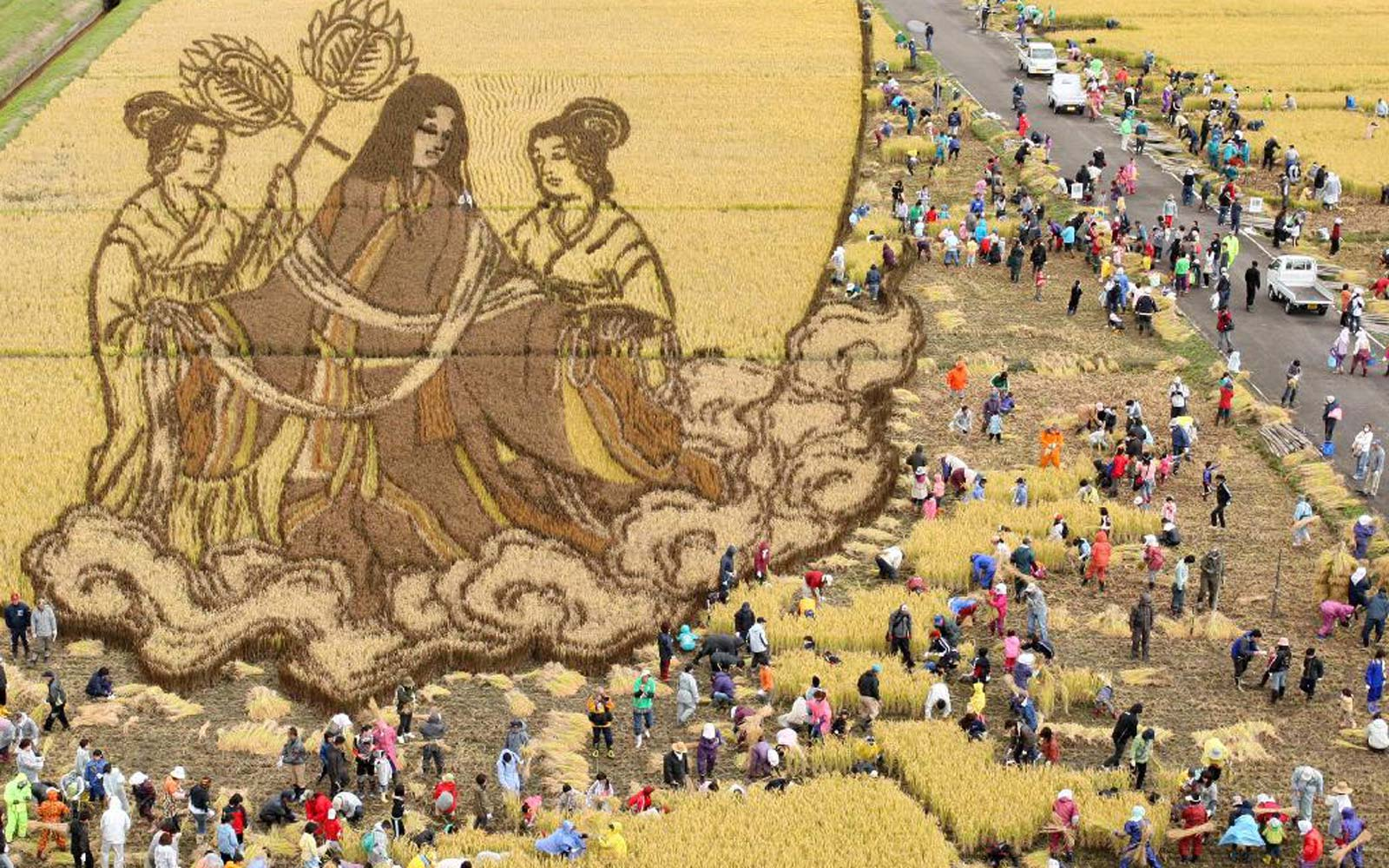 Rice Harvested At Rice Paddy Art Field