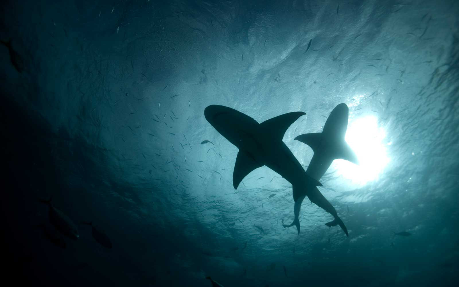 The U.S. Leads the World in Shark Attacks — but Those Numbers Are Going Down