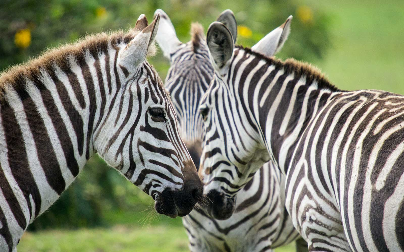 This Is Why Zebras Have Stripes — and Why You Should Wear Them, Too