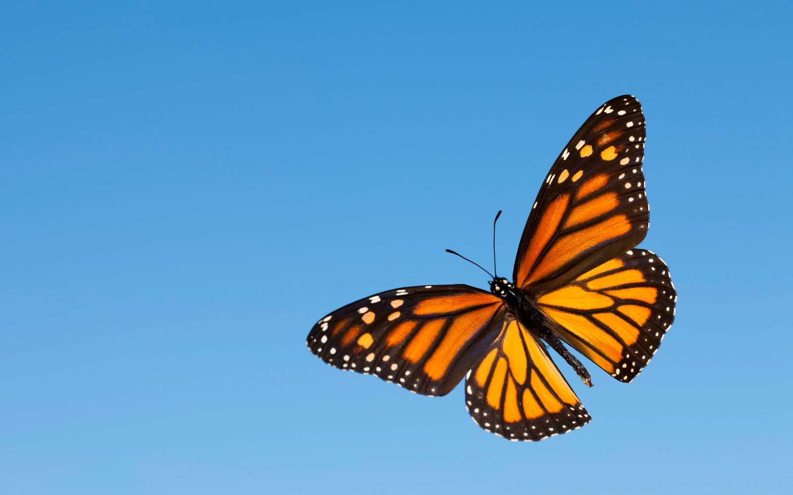 Texas Is Expecting 300 Million Monarch Butterflies After Major Wildflower Bloom