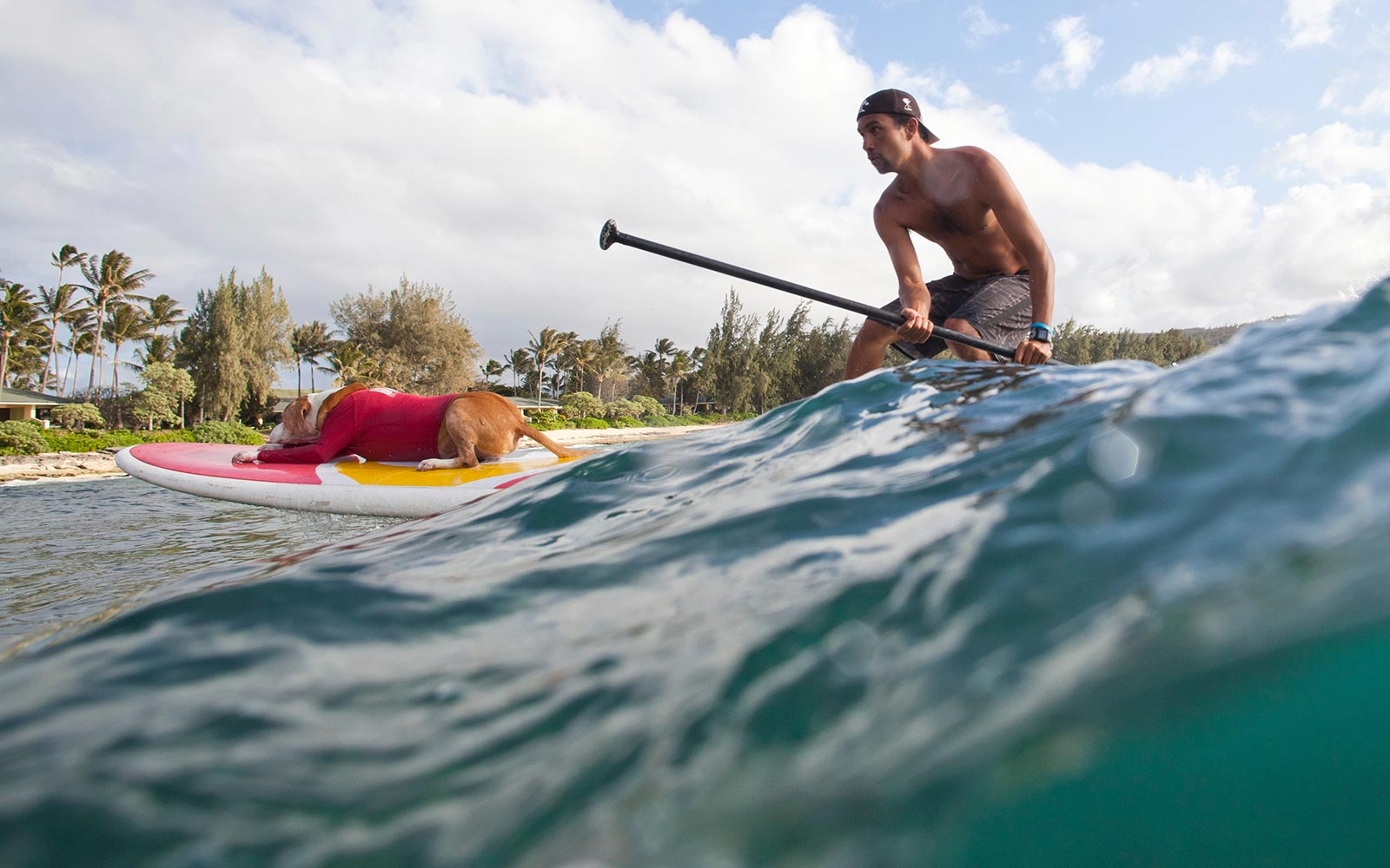 You Can Surf With Dogs and Swim With Sharks at This Hawaiian Resort
