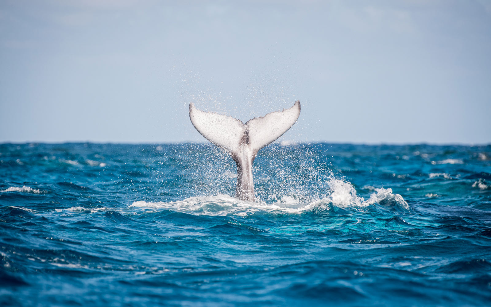 A Dominican Republic Cruise With Aquatic Adventures Lets You Swim with Humpback Whales