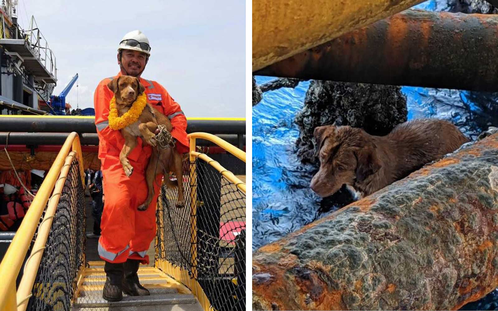 Oil Rig Workers Rescue Stray Dog Found Swimming 135 Miles Off Coast of Thailand