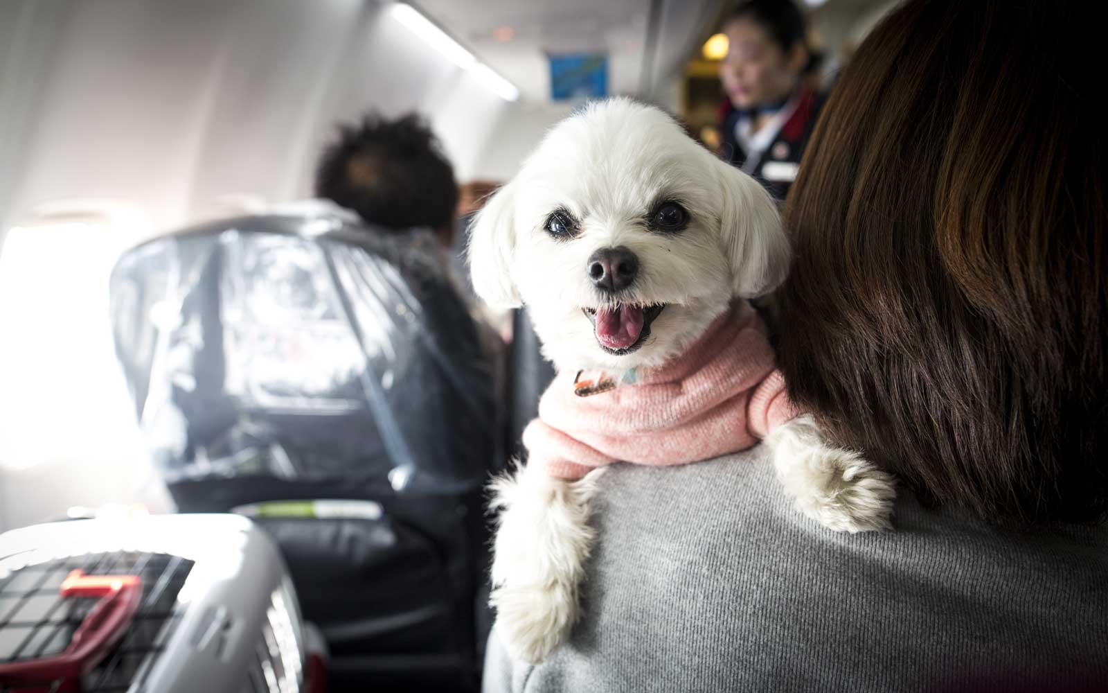 What to Do on Your Next Flight If You Have Animal Allergies