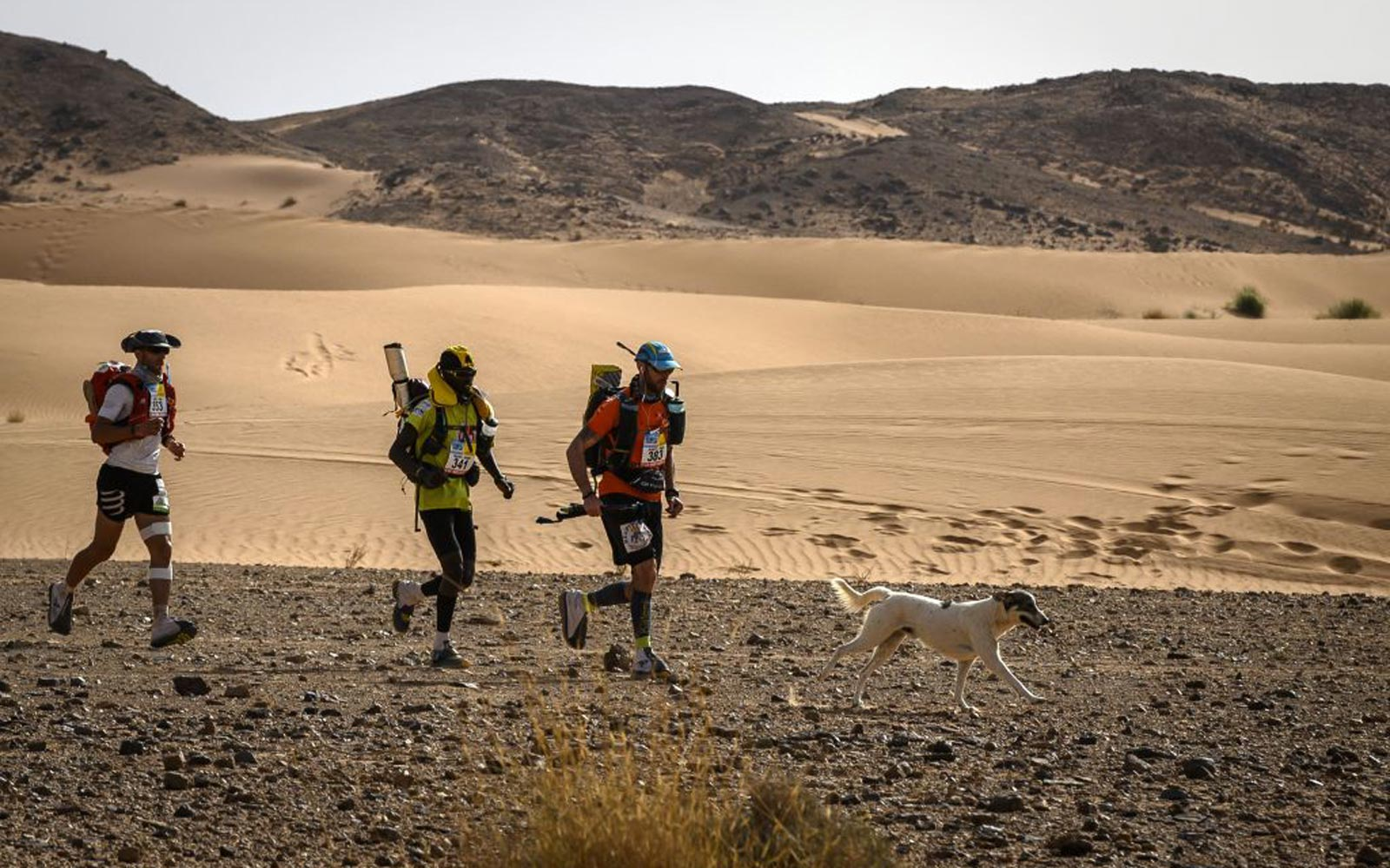 A Stray Dog Joined a 140-mile Footrace in the Sahara (and Stayed to Get His Medal)