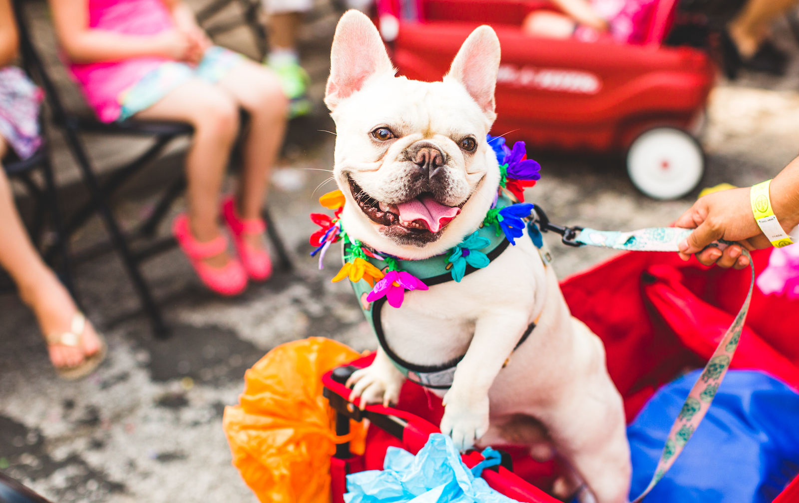 Fiesta San Antonio Will Bring Out Hundreds of Dogs in Colorful Costumes — Here's How to Join Them