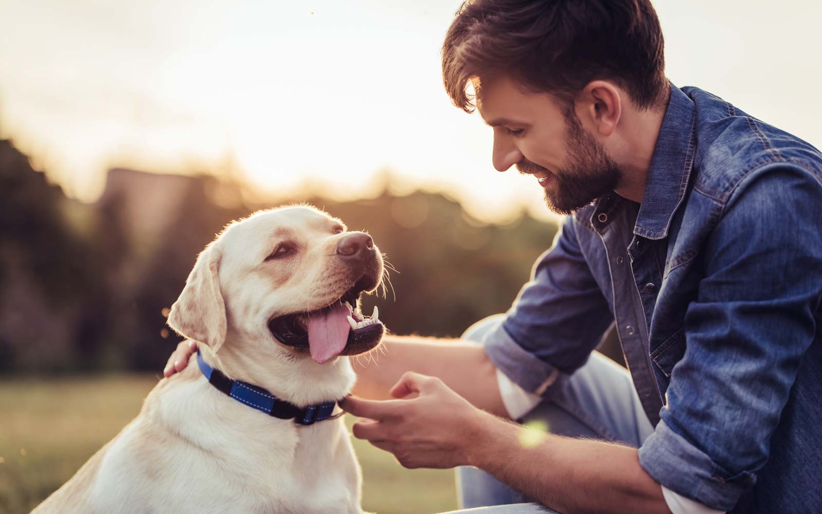 Study Finds Dog Owners Are Happier Than Cat Owners