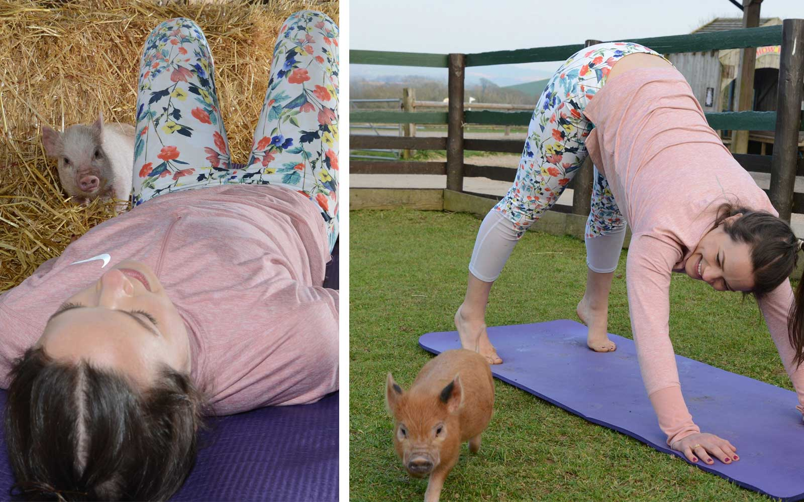 Pennywell Farm, UK - Pig Pilates