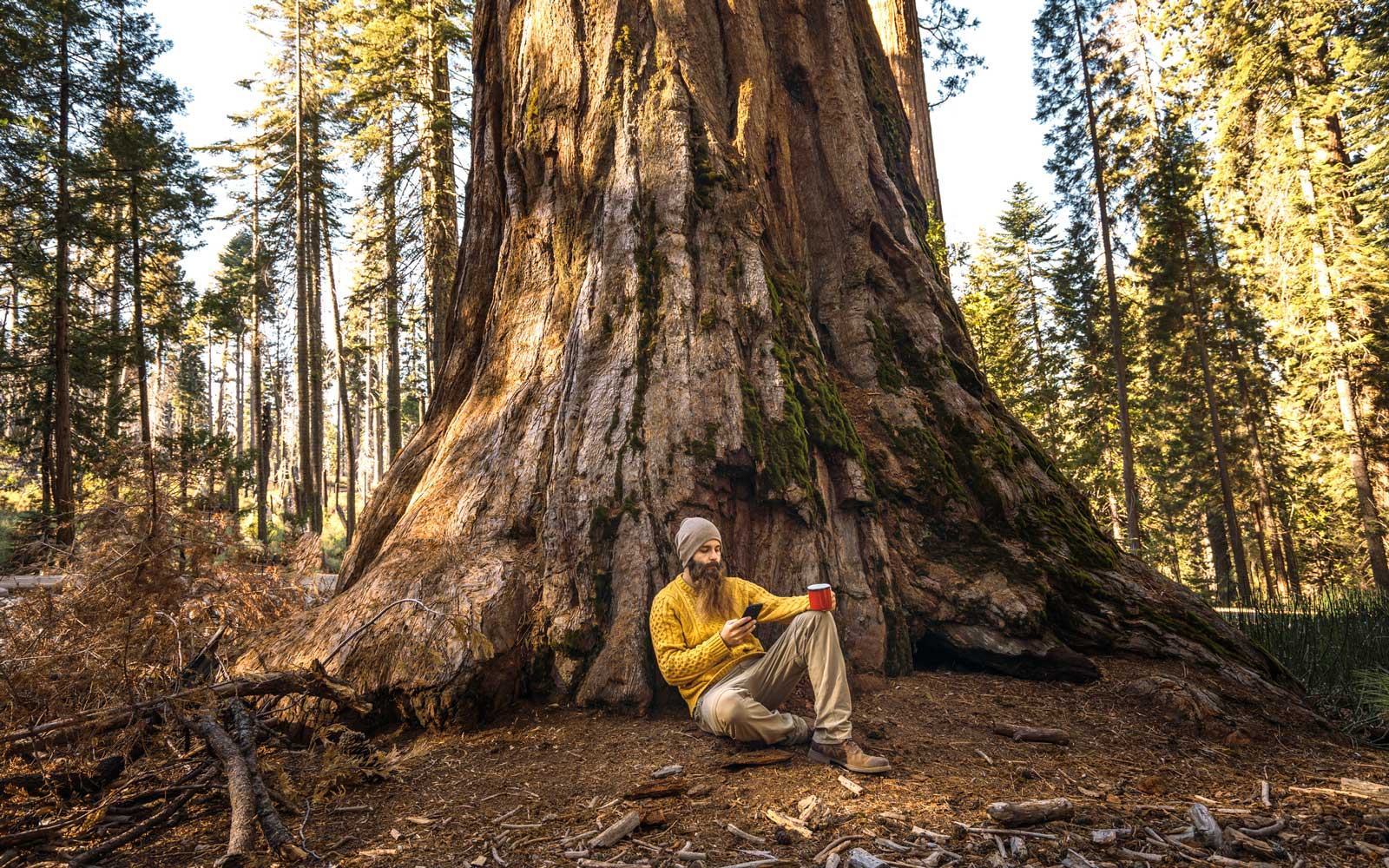 Sequoia National Park Will Soon Have Cell Service