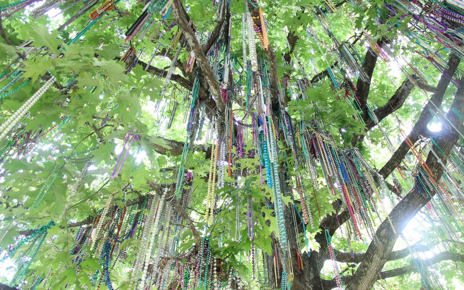 An Iconic Oak Tree Covered in Mardi Gras Beads Is Being Removed From Tulane University's Campus